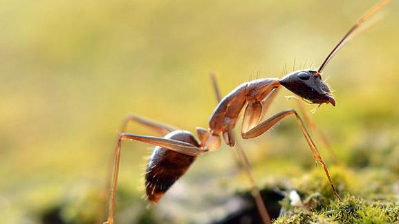 襄阳消杀公司|襄阳灭鼠,襄阳灭蟑螂,襄阳灭白蚁,襄阳灭蚊蝇|湖北卫士病媒生物防制有限公司